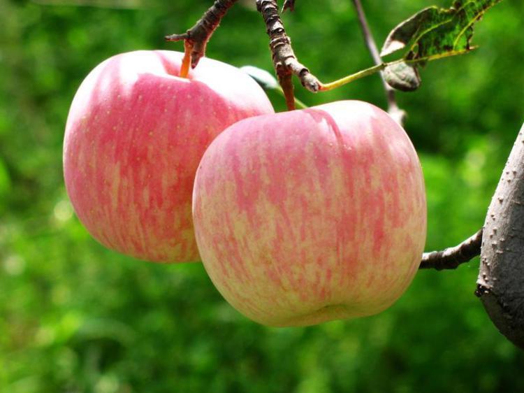 Applebaby